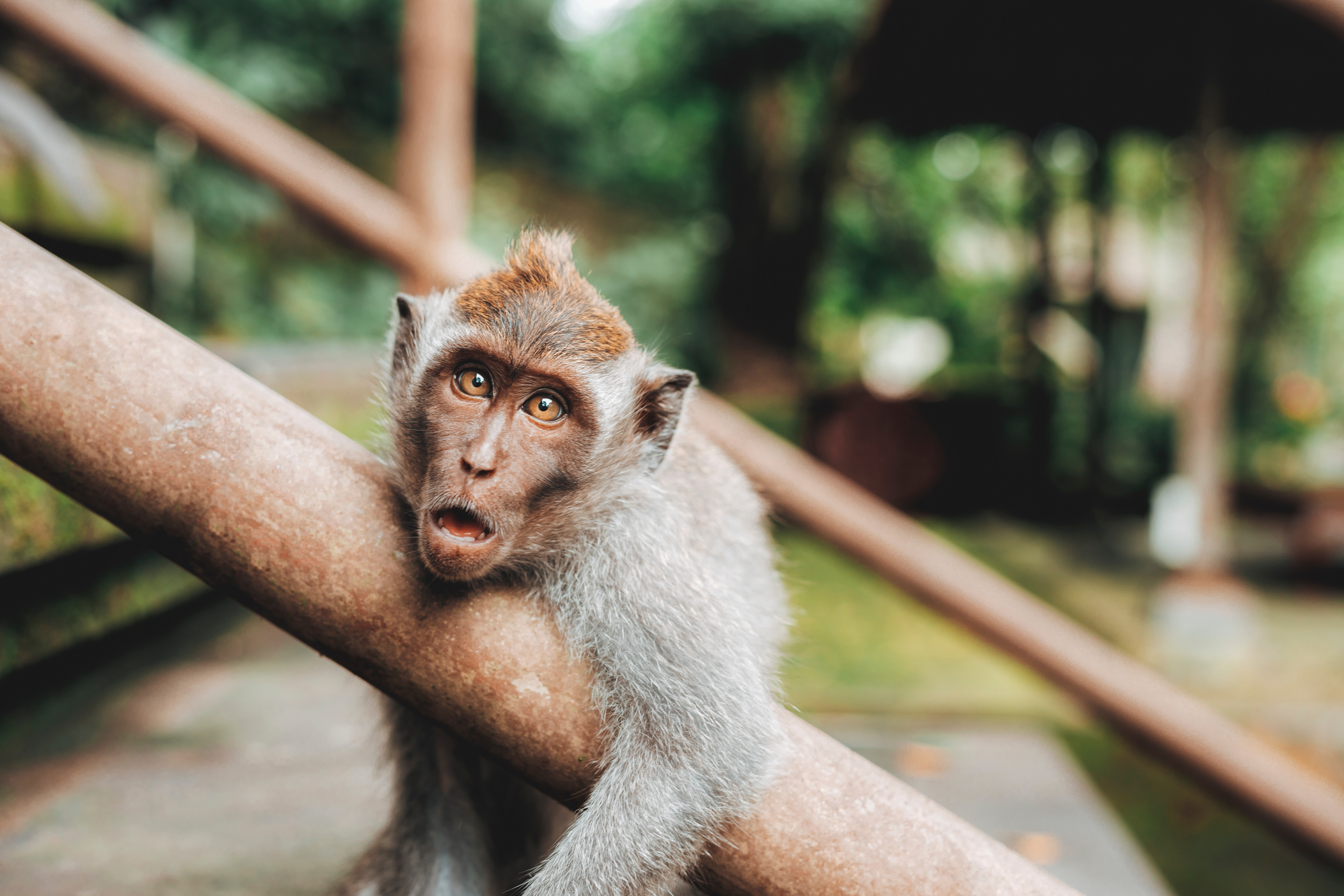 even monkeys have low energy levels