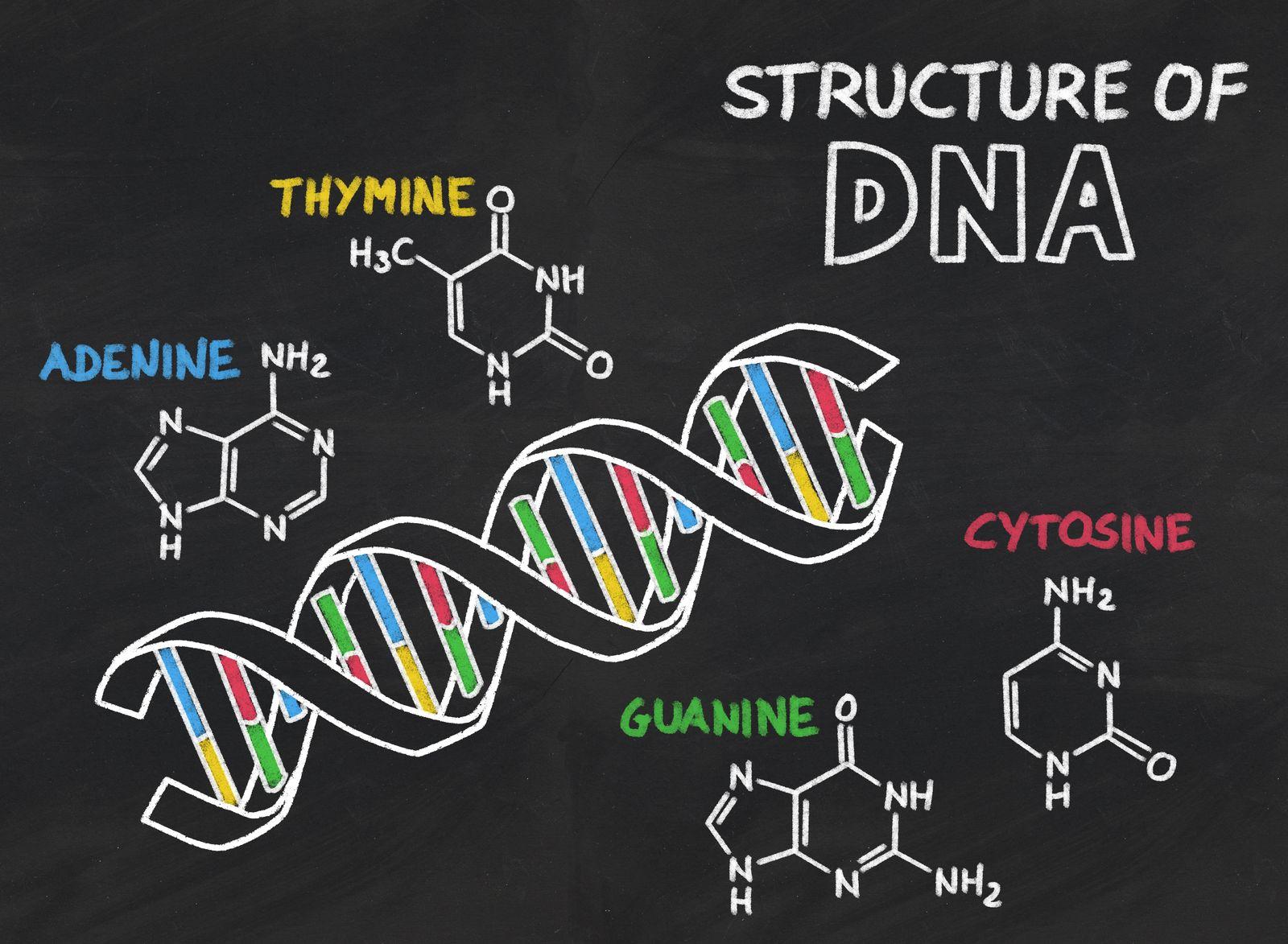 Unlocking Your Genetic Sleep Disposition: AANAT and Melatonin
