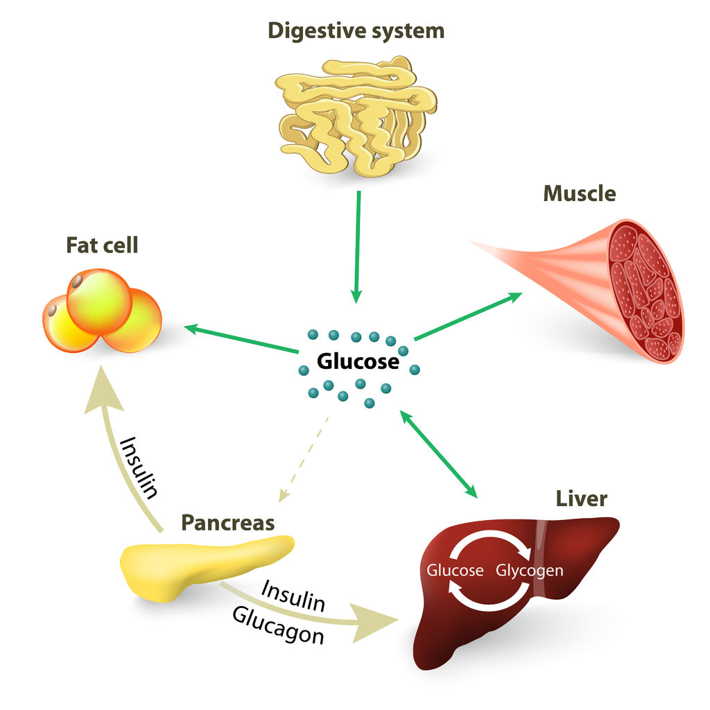 Understanding the Glycemic Index and Natural Diabetes Control